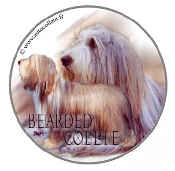 Bearded Collie Dekal
