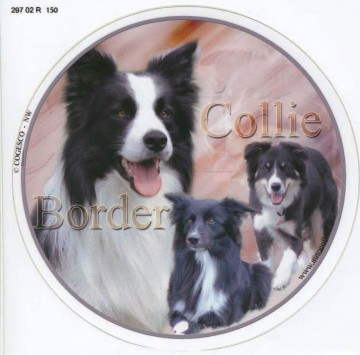 Border Collie Dekal