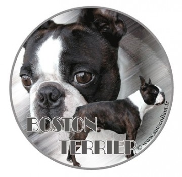 Boston Terrier Dekal