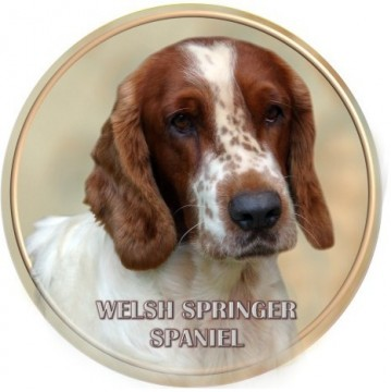 Welsh Springer Spaniel 3D Dekal