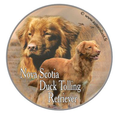 Nova Scotia duck tolling retri