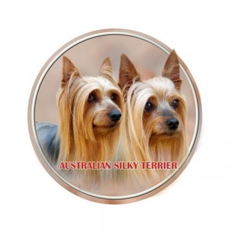 Australsk Silky Terrier