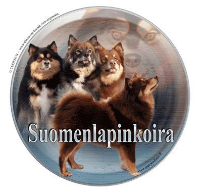 Finsk Lapphund