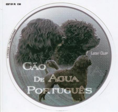Portugisisk Vannhund